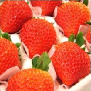 岐阜県オリジナルのイチゴ「華かがり」 他